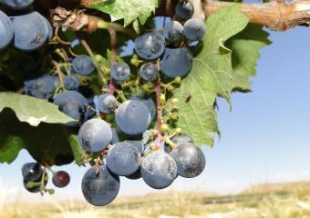 Mendoza e seus Vinhos