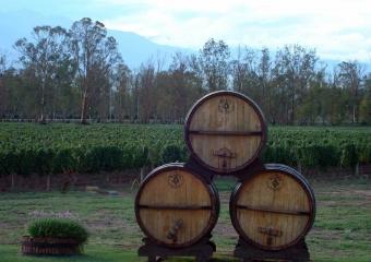 Mendoza Experiência de Vinhos e Gourmet
