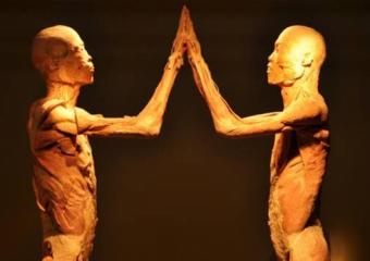 Exposição O Fantástico Corpo Humano
